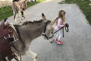 Donkey-riding-with-children-11
