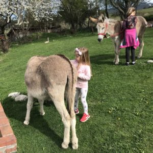 Donkey-riding-with-children-2