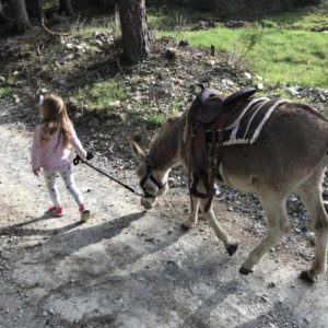 Donkey-riding-with-children-4