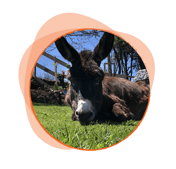 Последната дошла в семейството - изключително блага и мила. Бързо завърза приятелства с другите магарета, но все пак предпочита да е близо до хората. Скрити страсти: Увлича се по градинарството и обича да поддържа нашия двор.