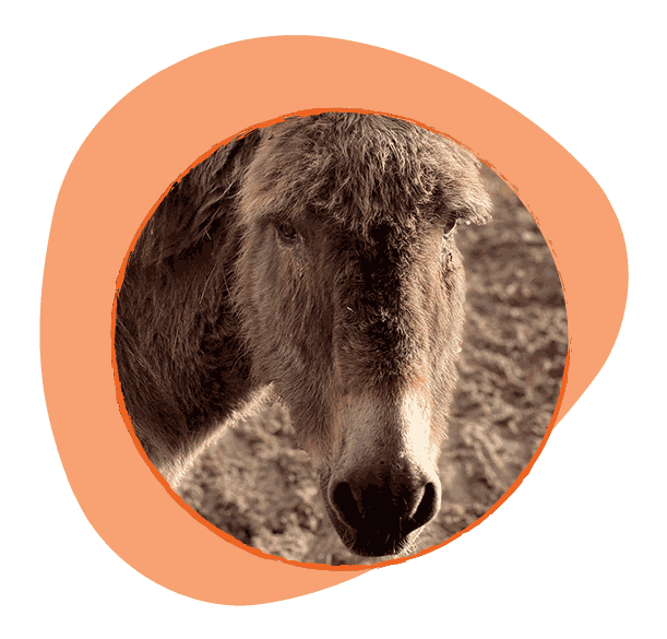 Едно от двете най-възрастни магарета в семейството. Бавен и спокоен е.