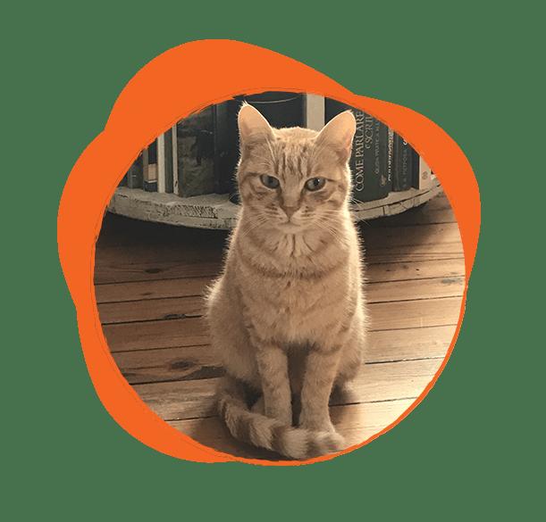 Котето Леополд е част от нашата дружина. Обожава компанията на магарешките си приятели и с радост ги масажира, ако не е зает с важни котешки дела …