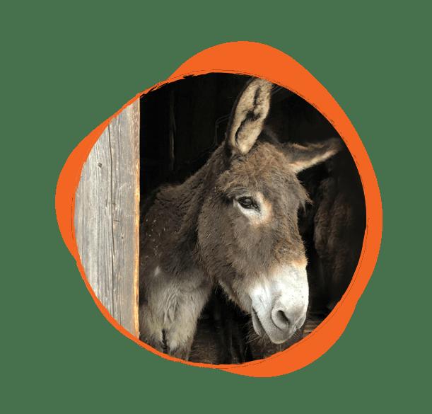 Едно от двете най-възрастни магарета, едър и дългокосмест. Много е добродушен и е истински кавалер - редовно помага на Гергана в грижите за градината.