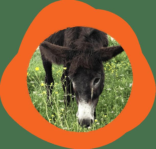 Черно магаре по цвят и по настроение. Не обича да го галиш и решиш, но дава максимума от себе си в преходите.