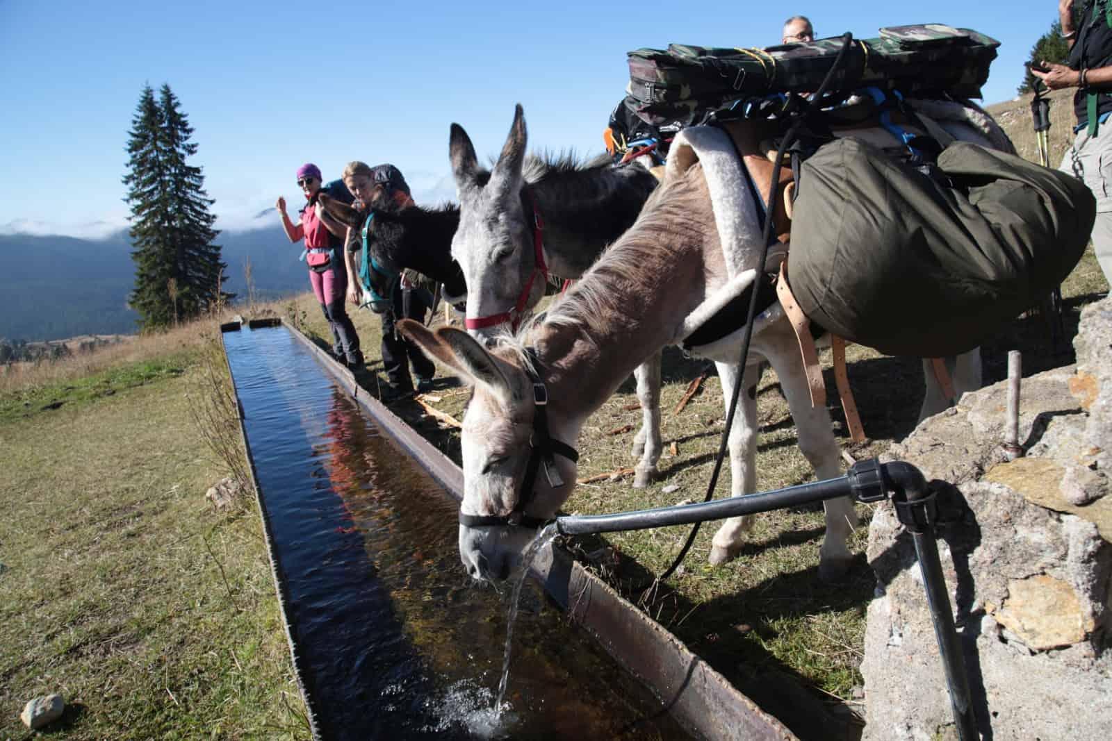 trip-thracian-donkey-13