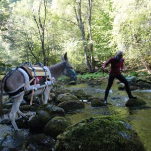 trip-thracian-donkey-2