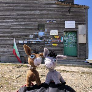 trip-donkeys-roses-12
